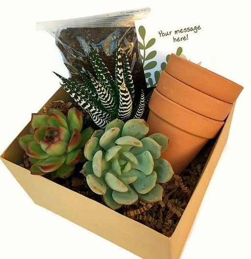 Basket for your mother to plant succulents